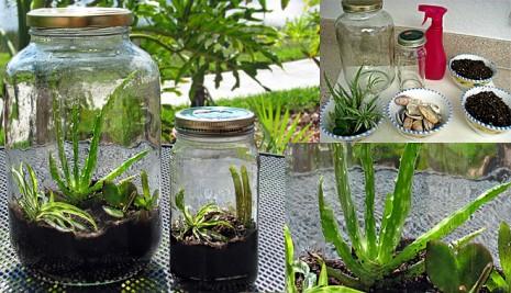 Terrario-con-envase-vidrio-recilado