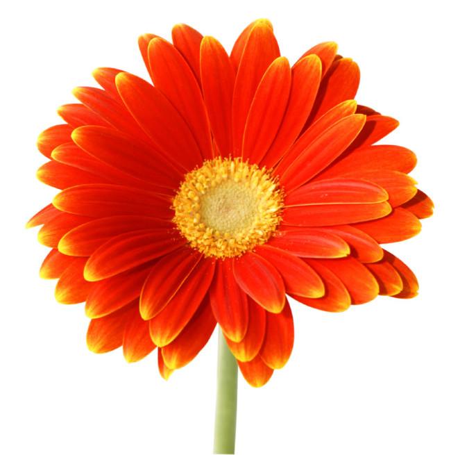 flores-2635
