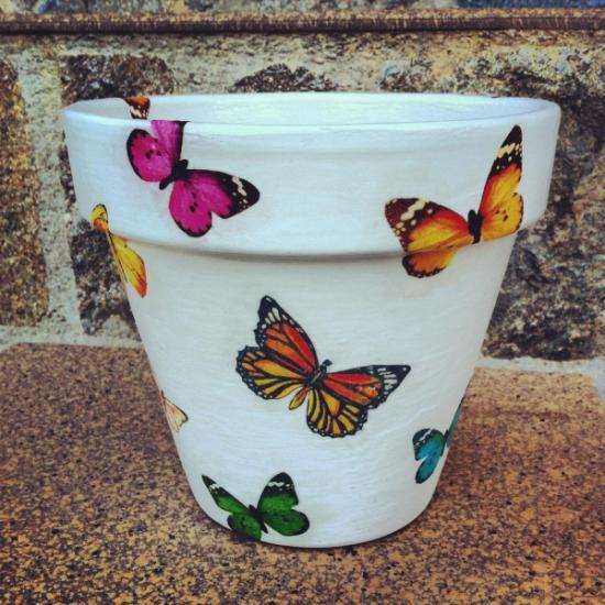 aceta_mariposas-698986